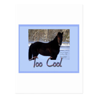 Black Horse in Snow: Too Cool Postcard