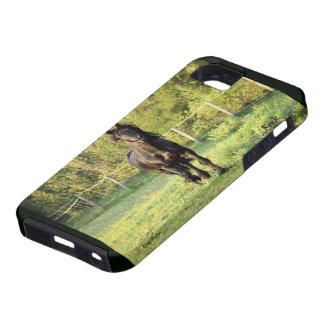 Black  Horse iPhone SE/5/5s Case