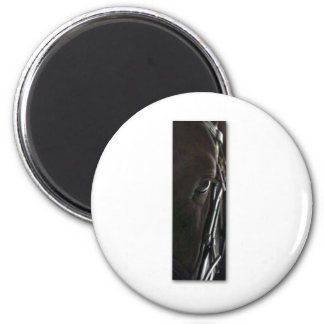 black horse magnet