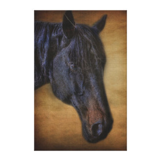 Black Horse Portrait on Rustic Parchment effect Canvas Print
