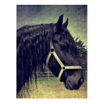 Black Horse Post Cards