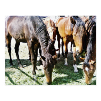 Black Horse Postcard