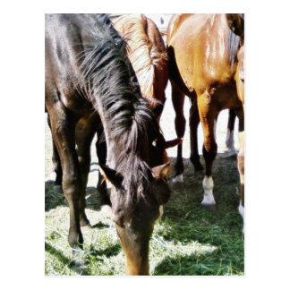 Black Horse Postcards