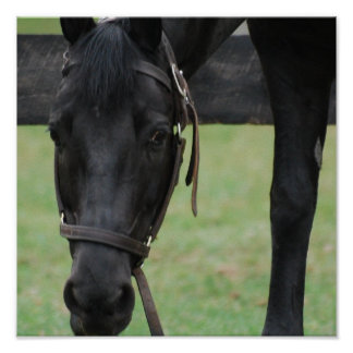 Black Horse Poster