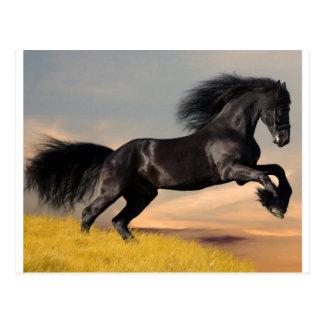 black_horse_running.jpg tarjetas postales