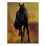 Black Horse Silhouette Postcard