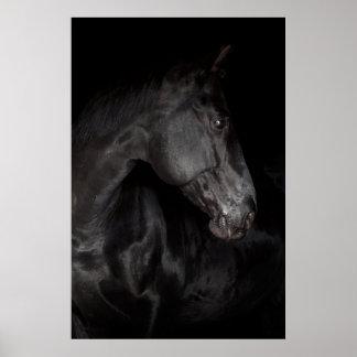 Black Horse Stallion Photo Nature Wall Poster
