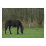 Black Horse standing Stationery Note Card