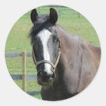 Black Horse Sticker