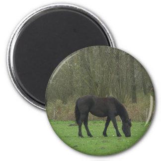Black Horse walking Fridge Magnet
