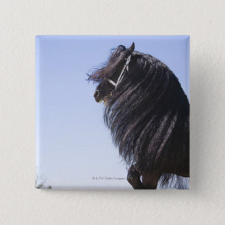 black horse with long mane pinback button