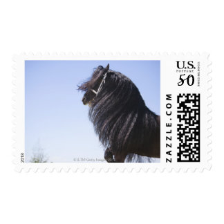 black horse with long mane postage