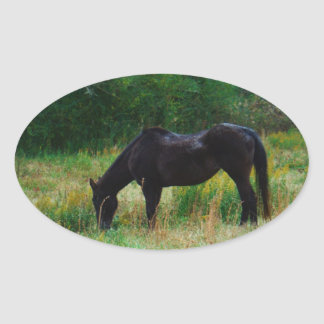 Black horse : yellow flowers oval sticker