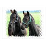 Black Horses Design Postcard