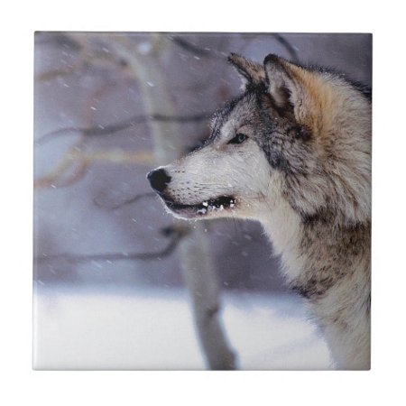 Black Husky Dog Products Ceramic Tiles