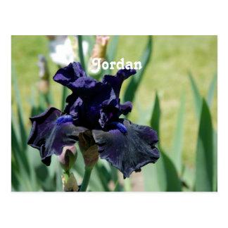 Black Iris Post Cards