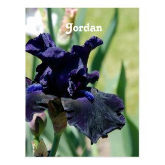 Black Iris Post Card