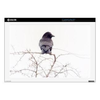 "Black Jackdaw Bird Lookout 17"" Laptop Skins"