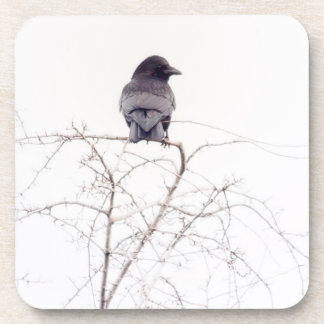 Black Jackdaw Bird Lookout Coaster