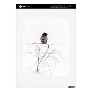 Black Jackdaw Bird Lookout iPad 3 Skin