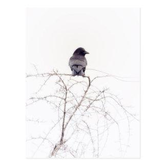 Black Jackdaw Bird Lookout Postcard