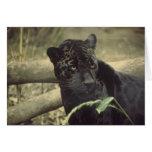Black_jaguar art cards