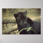 Black_jaguar art posters