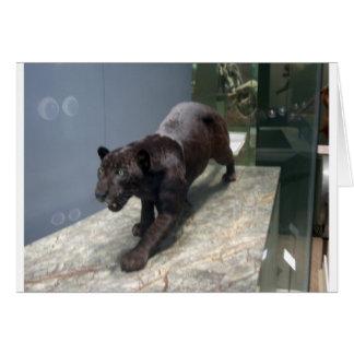 Black Jaguar (Panthera onca) Card