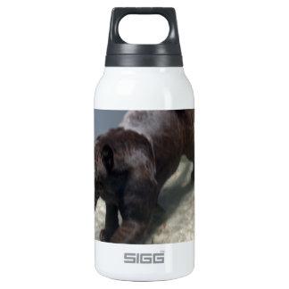 Black Jaguar (Panthera onca) Thermos Water Bottle