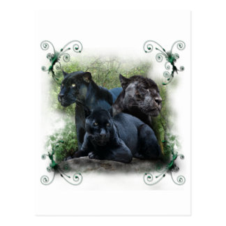 Black Jaguar Postcard