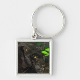 Black Jaguar Prowling Keychain