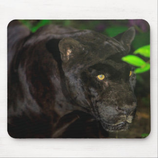 Black Jaguar Prowling Mouse Pad
