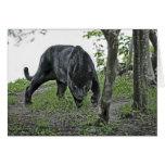 Black Jaguar Stalking Card