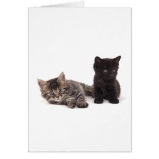 black kitten and tabby kitten carte de vœux
