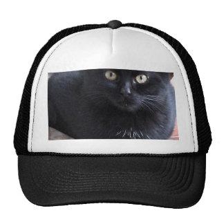 Black Kitten Cat Trucker Hat