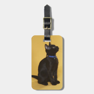 Black kitten in collar bag tag