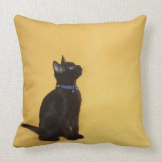 Black kitten in collar pillow