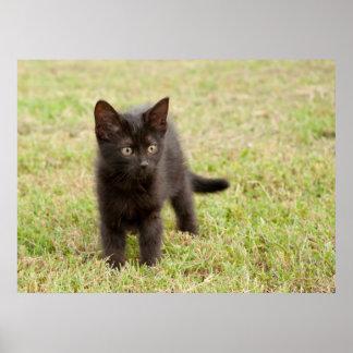 Black Kitten in Grass Poster