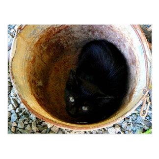 Black Kitten in Rusty Metal Bucket Postcard