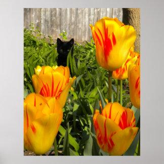 Black Kitten in Tulips Poster