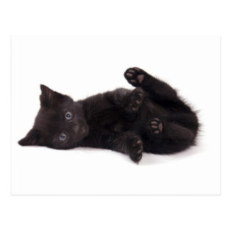 black kitten tarjeta postal