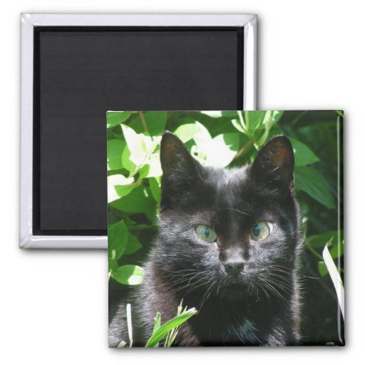 Black Kitty Cat 2 Inch Square Magnet