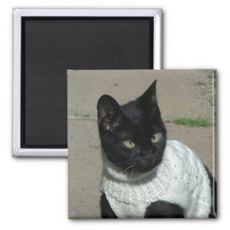 Black Kitty Cat in White Sweater Magnet