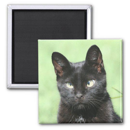 Black Kitty Cat Magnet