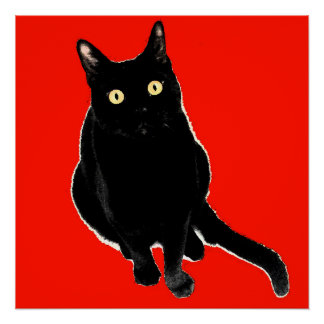 Black Kitty Cat Photography Artwork Poster