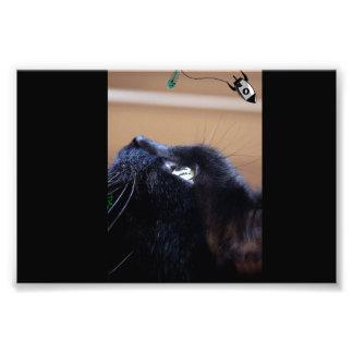 black kitty cat wants space fish photo art