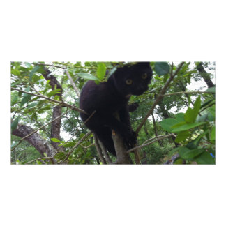 Black Kitty in a Tree Custom Photo Card