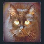 "black kittycat bandana<br><div class=""desc"">pussycat</div>"