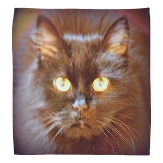 black kittycat bandana