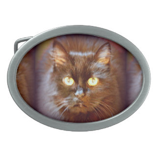 black kittycat belt buckle
